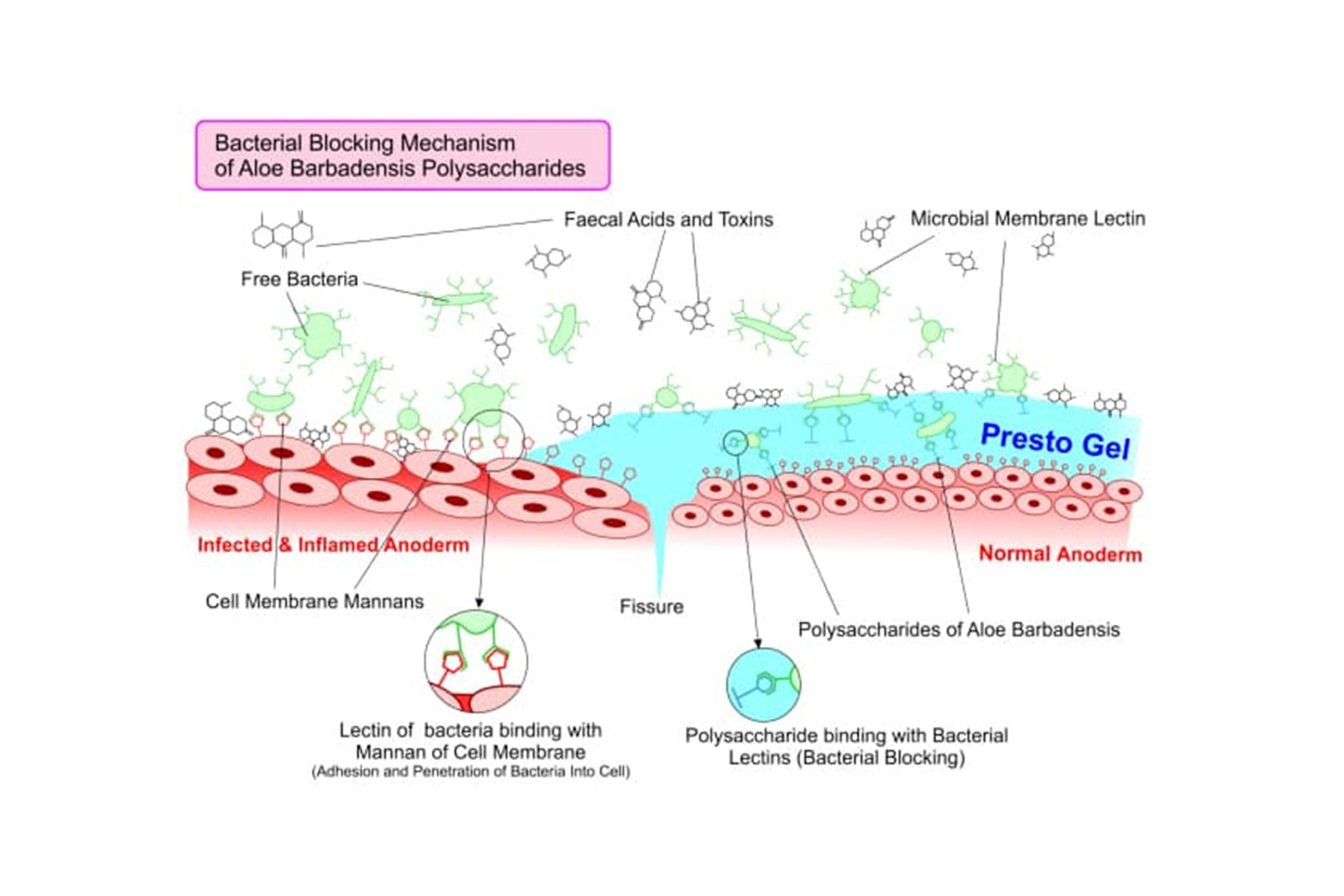 Bacterial Blocking Mechanism of Aloe barbadensis polysaccharides